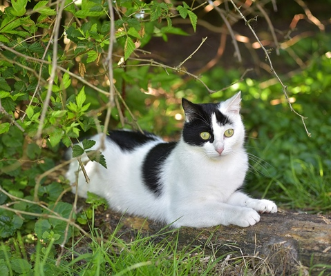 You are currently viewing Un projet pour les chats errants de Cers : appel à bénévoles